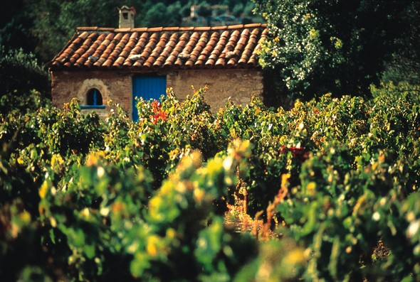 beauty-tradition-and-lots-of-flavours,-all-come-together-on-the-best-wine-tasting-routes-in-alicante