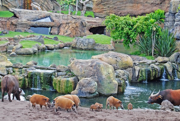 learn-about-the-treasures-hidden-within-the-bioparc-de-valencia-animals