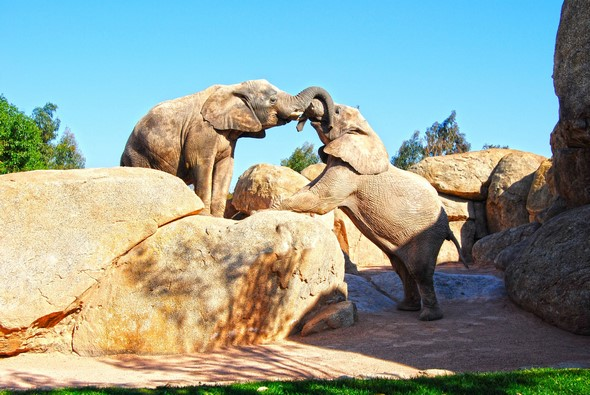 Learn About The Treasures Hidden Within The Bioparc De Valencia